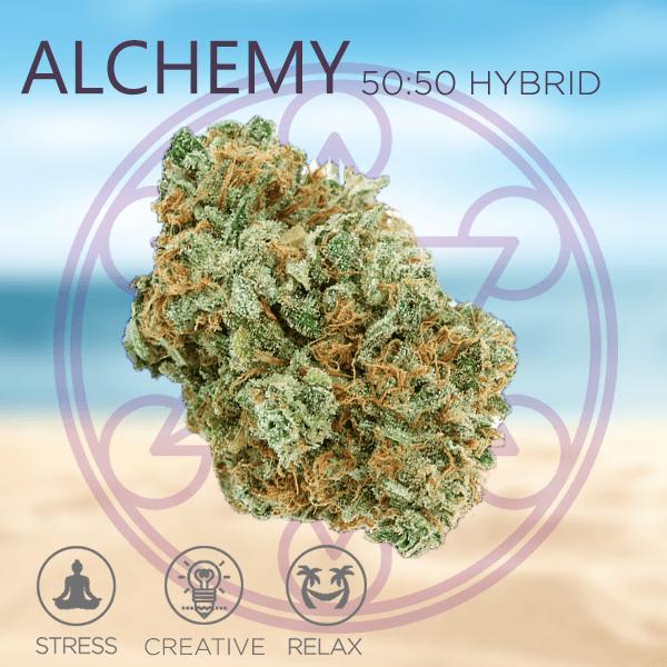 Alchemy strain