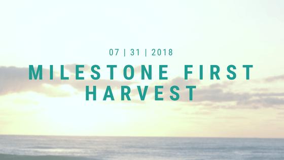 https://tropizen.com/wp-content/uploads/2019/04/Milestone-first-harvest.png